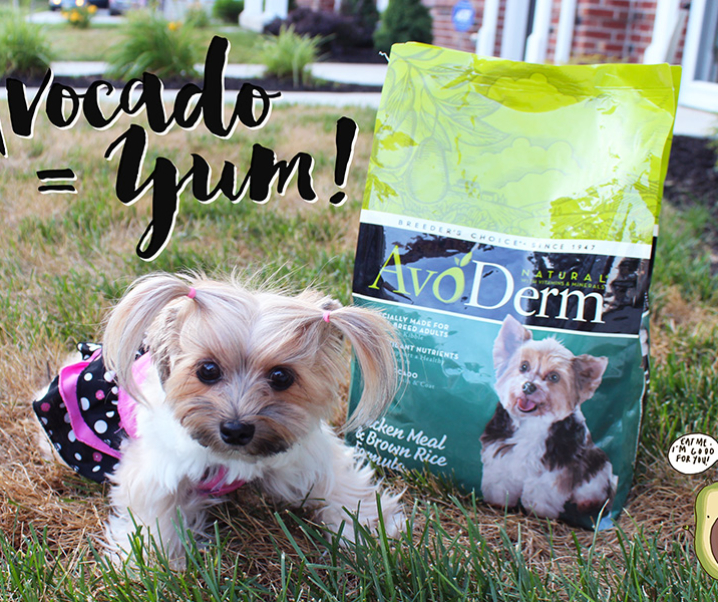 The Truth About Avocados and Why Choose Avoderm for your Furbaby