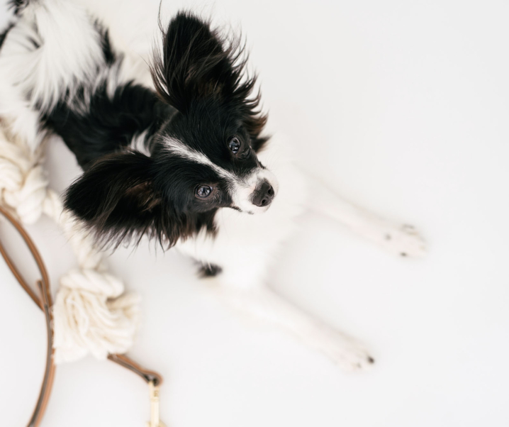 4 Things To Consider Before Getting A Pet