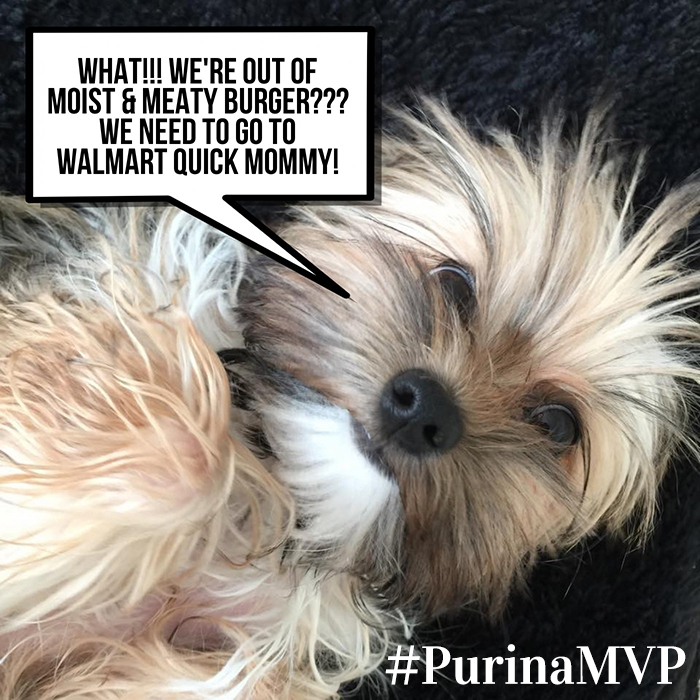 PurinaMVP, Purina