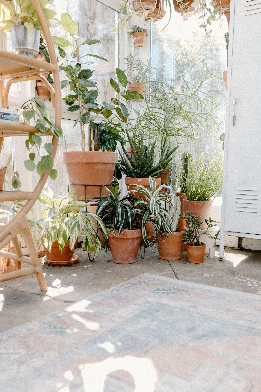 garden, gardening, backyard, plants