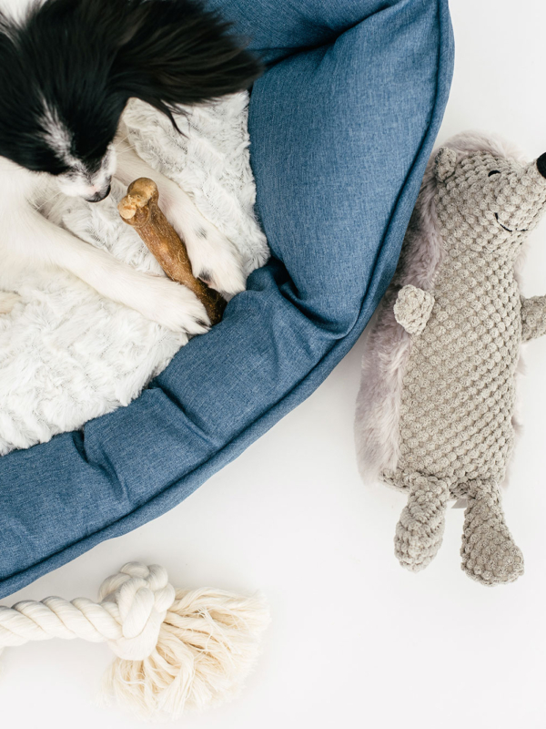 10 Essential Considerations To Make Before Getting A Dog